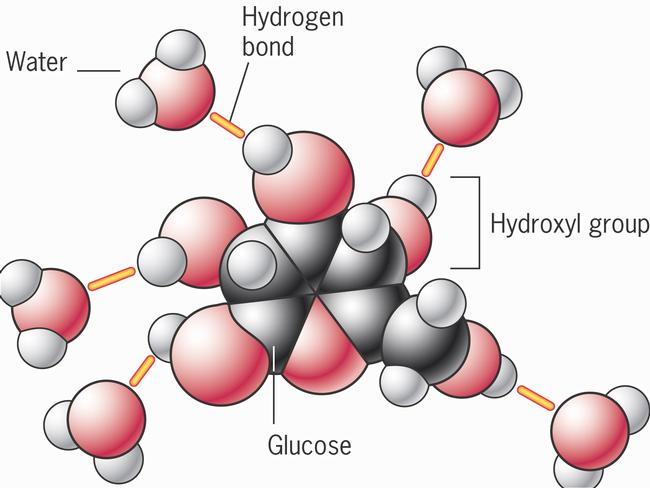 how to tell if a molecule will form hydrogen bonds