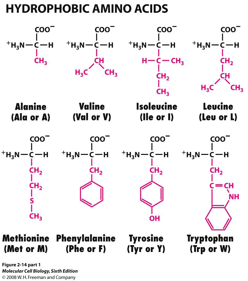hydrophilic vs hydrophobic molecules