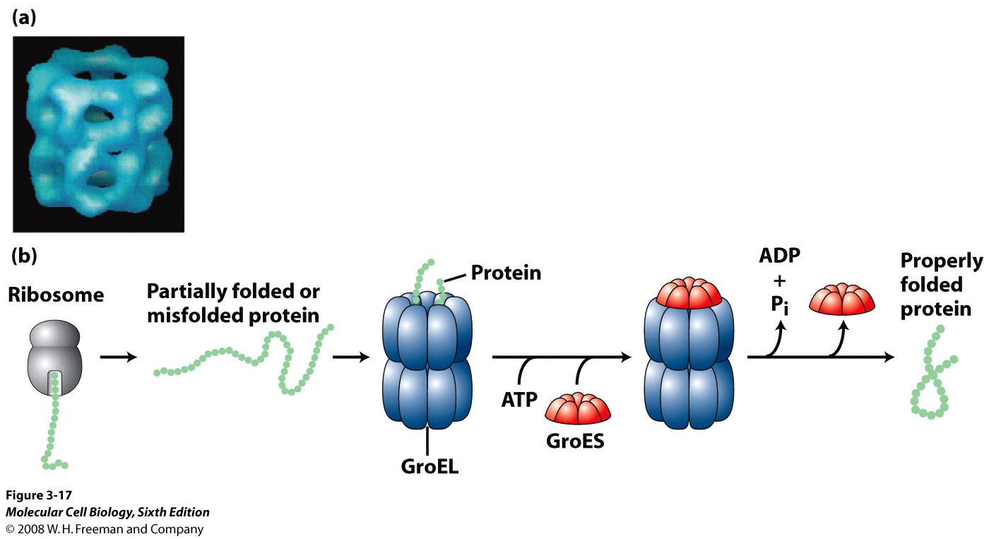 protein folding theory essay Protein folding: a perspective from theory and search for more papers by real-time protein nmr spectroscopy and investigation of assisted protein folding.