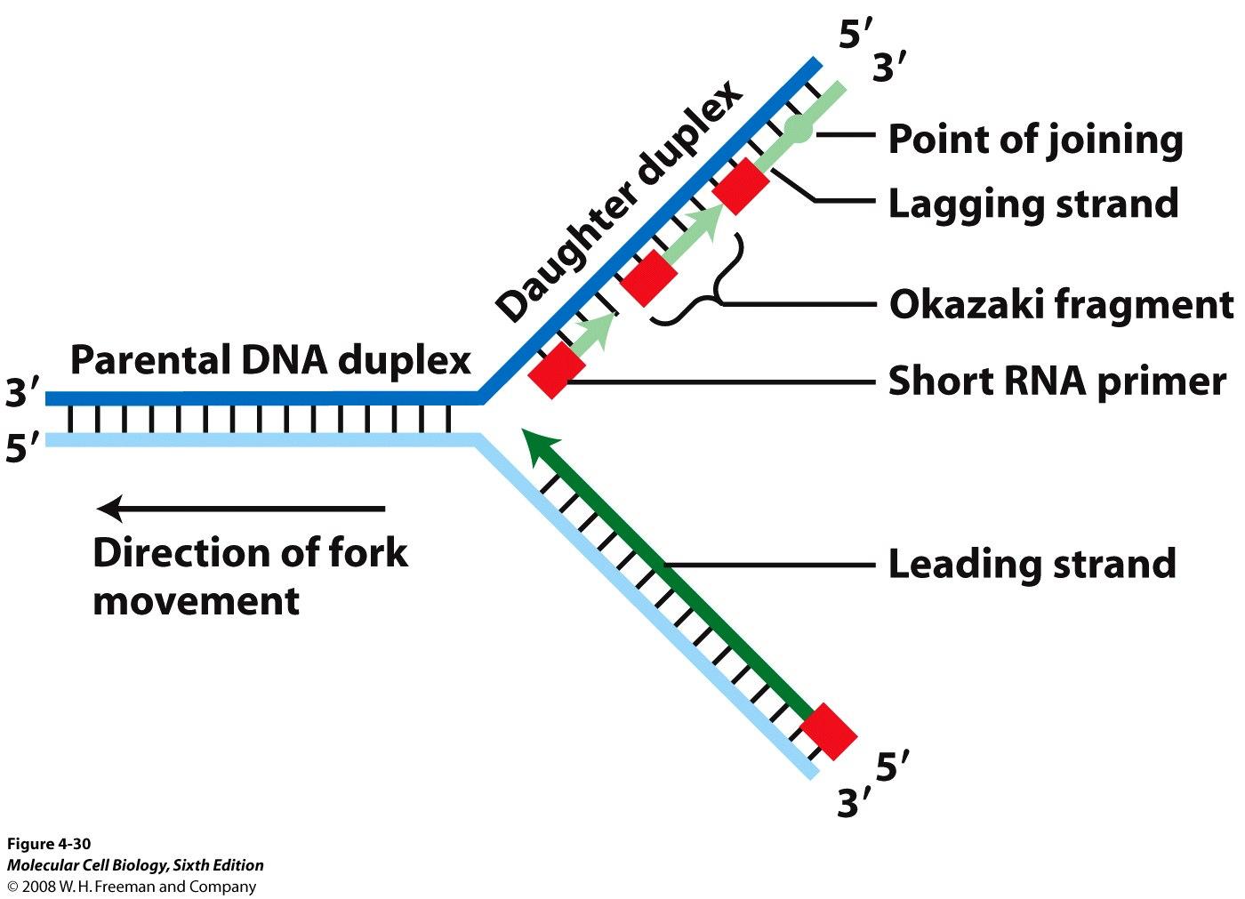 forking diagram